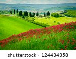 Hill Covered By Red Flowers...