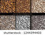 Stock vector vector illustration set of animal seamless prints tiger and leopard patterns collection in 1244394403