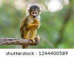Cute Monkey On Blurred...