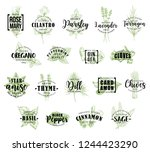 spice and herb vector lettering.... | Shutterstock .eps vector #1244423290