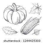 pumpkin and corn with seeds and ... | Shutterstock .eps vector #1244425303