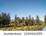 cupertino  ca   usa   october... | Shutterstock . vector #1244441059