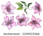 watercolor set of flowers  hand ... | Shutterstock . vector #1244515366