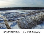 the felled trees lie under the... | Shutterstock . vector #1244558629