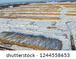 the felled trees lie under the... | Shutterstock . vector #1244558653