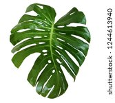 monstera leaf low poly.... | Shutterstock .eps vector #1244613940