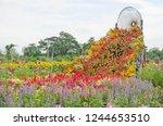 bridge of beautiful flowers in... | Shutterstock . vector #1244653510