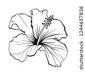 hawaiian hibiscus laser cut... | Shutterstock .eps vector #1244657836