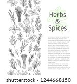 culinary herbs and spice... | Shutterstock .eps vector #1244668150