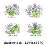culinary herbs and spice... | Shutterstock .eps vector #1244668390