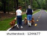 family walking golden retrievers - stock photo
