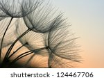 close up of a dandelion in the... | Shutterstock . vector #124467706
