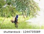 sung noen  korat   thailand  ... | Shutterstock . vector #1244735089