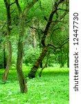 green forest | Shutterstock . vector #12447730