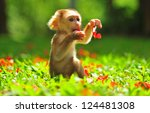 Animal   Baby Monkey Sitting O...