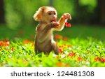 Animal   Baby Monkey Sitting O...