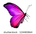 Stock photo pink violet butterfly isolated on white 124483864