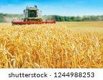 combine harvester harvests ripe ...   Shutterstock . vector #1244988253