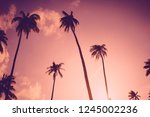 copy space of silhouette... | Shutterstock . vector #1245002236