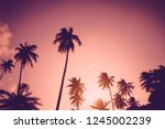 copy space of silhouette... | Shutterstock . vector #1245002239
