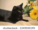 Stock photo black cat and yellow flower 1245033190