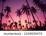 copy space of silhouette... | Shutterstock . vector #1245035473