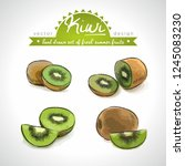 kiwi. vector hand drawn... | Shutterstock .eps vector #1245083230
