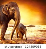 Elephant. Mother With Baby...