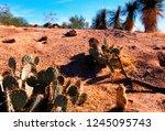 tucson  arizona  usa  arizona... | Shutterstock . vector #1245095743