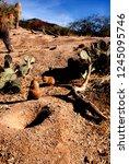 tucson  arizona  usa  arizona... | Shutterstock . vector #1245095746
