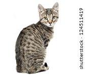 Stock photo little gray kitten isolated on white background 124511419