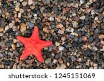 starfish on the background of... | Shutterstock . vector #1245151069