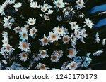 wedding flowers   daisy flowers | Shutterstock . vector #1245170173