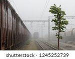 old train wagons parked in the... | Shutterstock . vector #1245252739