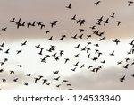 many birds flying in the sky ... | Shutterstock . vector #124533340
