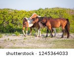 a group of wild ponies  equus... | Shutterstock . vector #1245364033