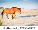 a wild pony  equus caballus ... | Shutterstock . vector #1245364039