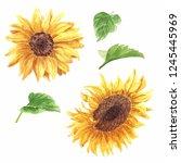 hand drawn watercolor sunflower ... | Shutterstock . vector #1245445969