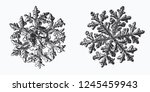 two snowflakes isolated on... | Shutterstock .eps vector #1245459943