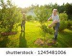 Happy Senior Couple Gardening...