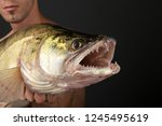 fishing. fisherman and trophy... | Shutterstock . vector #1245495619