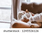 Stock photo cute cat sleeping on owners s hands one winter day girl relaxing with her pet on a sofa cosy 1245526126