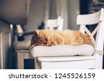 ginger cat sleeping on a chair... | Shutterstock . vector #1245526159