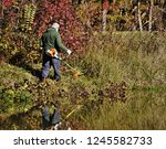 an old man cutting the bushes... | Shutterstock . vector #1245582733
