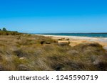 lake clifton south western... | Shutterstock . vector #1245590719