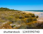 lake clifton south western... | Shutterstock . vector #1245590740