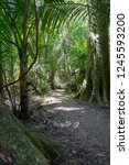 path through native plants and... | Shutterstock . vector #1245593200
