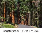 sequoia national park | Shutterstock . vector #1245674353