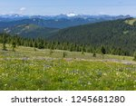 alpine flowers meadow | Shutterstock . vector #1245681280