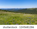 alpine flowers meadow | Shutterstock . vector #1245681286